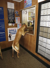 Pukka at Post Office